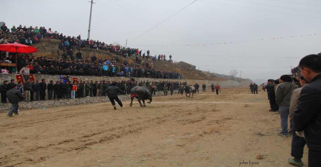 Bullfighting festival